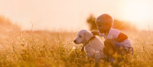 A young boy crouching next to a golden Labrador in a field at sunrise