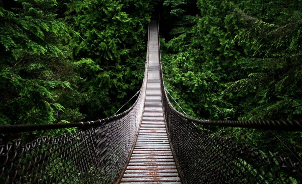 A long rope bridge in a forest, striking a balance between each side.