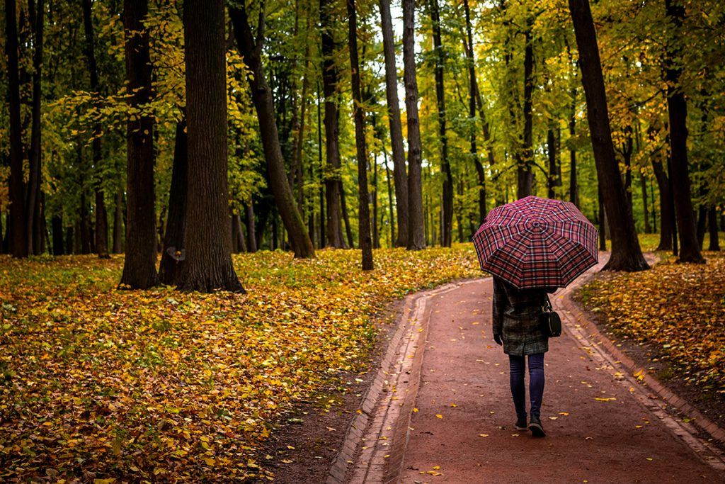 Lady walking along a path with an umbrella for protection on an Autumn day