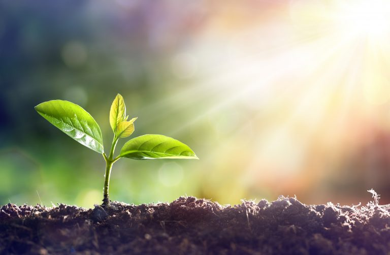 New plant growing in the soil and the sun shining, UK economy poised for recovery