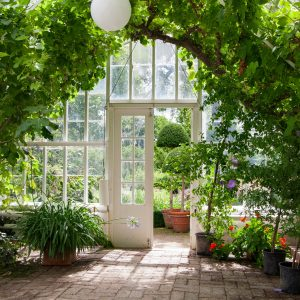 A green house full of flowers, plants and trees, equity release